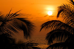 African sunset. Golden african sunset with coconut palm trees as silhouettes Stock Images