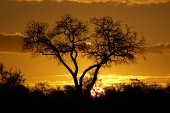 African sunset. Sunset with tree sillouette Stock Image