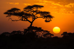 African sunset. African Acacia tree in the last daylight, Amboseli National Park, Kenya Royalty Free Stock Photography