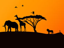 African sunset and animals Stock Photo