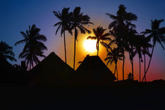 African sunset. Beautiful african sunset with silhouetted palms, Zanzibar, Tanzania royalty free stock photography