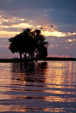 African Sunset - Botswana. Two Yellowbilled Stork landing in a tree to roost. An African sunset on the Chobe River on the border of Botswana and Namibia Stock Photos