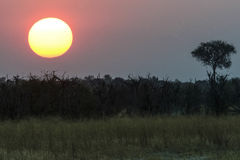 African sunset Royalty Free Stock Photos