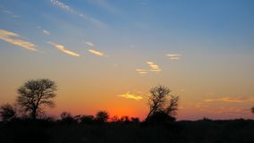 African sunset at Central Kalahari Game Reserve, Botswana. African Sunset with predominant blue, Orange and black as colurs. Location: Central Kalahari Game Royalty Free Stock Photography