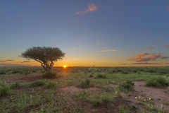 African Sunset. With green grass and yellow flowers, South Africa Royalty Free Stock Photos