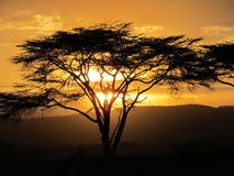 The african sunset Royalty Free Stock Image