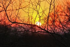 African sunset in the Kruger National Park, South Africa Stock Images