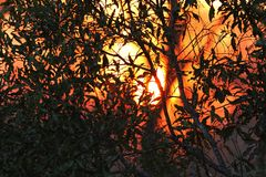 African sunset in the Kruger National Park, South Africa Royalty Free Stock Photography
