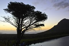 African Sunset. Sunset over Noordhoek beach with a silhouette of a tree in the foreground and a mountain peak in the background royalty free stock photo