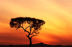 African Sunset. A photo of an African sunset shot in Tanzania Royalty Free Stock Images