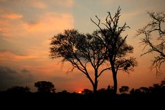 African Sunset, Sabi Sand Reserve Royalty Free Stock Photo