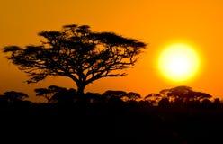 African sunset in savannah stock image