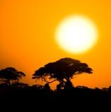 African sunset in savannah Royalty Free Stock Image