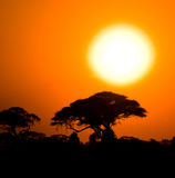 African sunset in savannah Stock Photos