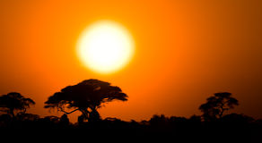 African sunset in savannah Royalty Free Stock Photos