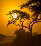 African sunset in savannah Royalty Free Stock Photography
