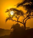 African sunset in savannah. Panorama of african sunset in savannah, kenya Royalty Free Stock Photography