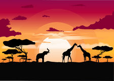 African sunset in the savannah with silhouette of animals. African sunset in the savannah with silhouette of giraffe, elephant and lone acacia tree Royalty Free Stock Photos