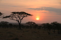 African sunset, Serengeti National Park, Tanzania Royalty Free Stock Photography