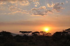 African Sunset. In the Serengeti park  @ Tanzania Stock Photography