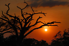 African sunset Stock Image