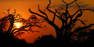 African sunset Royalty Free Stock Photos