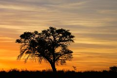 African sunset with silhouetted tree Stock Photos
