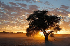 African sunset with silhouetted tree Royalty Free Stock Photography