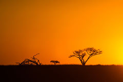 African Sunset South Africa. African sunset in South Africa with silhouette of acacia trees Royalty Free Stock Photos