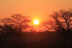 African Sunset. Sun setting behind tress in Southern Africa Royalty Free Stock Photo