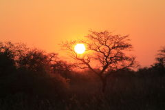 African Sunset. Sun setting behind tress in Southern Africa Royalty Free Stock Photos