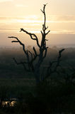 African Sunset Tree Stock Images