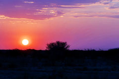 African sunset with tree Stock Photos