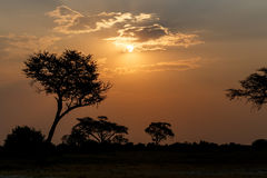 African sunset with tree in front Royalty Free Stock Photos