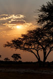 African sunset with tree in front Royalty Free Stock Images