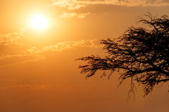 African sunset with tree in front Royalty Free Stock Photo