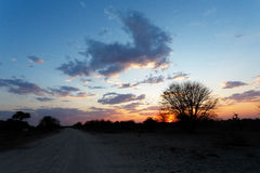 African sunset with tree in front Stock Images