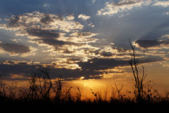 African sunset with tree in front Royalty Free Stock Photography
