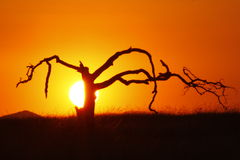 African Sunset. With tree silhouette Stock Photo