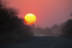 African sunset with a tree silhouette. And dusty road Stock Photos