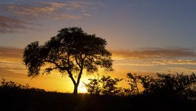 African sunset with a tree silhouette and large orange sun. African sunset with a tree silhouette and the large orange sun Royalty Free Stock Images