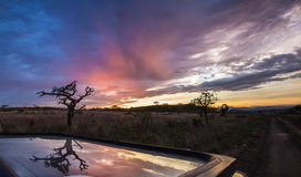 African sunset with Tree, South Africa Stock Photography