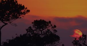 African sunset through the trees. This is a video of the sun moving through the clouds and setting into the trees. This is a 1080 P one minute long video. There` stock video footage