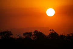 African sunset. A typical african sunset. Trees, mountain and the sun Stock Photography