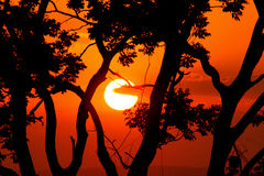 African sunset. Vibrant African sunset through tree branches royalty free stock photo