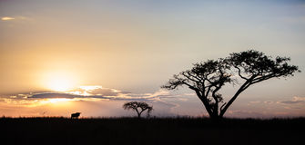 African sunset with wildebeest, South Africa Royalty Free Stock Photo