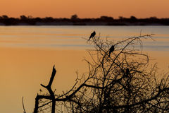 African sunset on Zambezi. River, in front silhouette of two birds,  Caprivi strip region, Namibia Royalty Free Stock Photography
