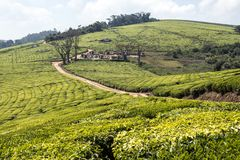 African tea plantations. Dirt road and a few houses among tea plantations in the Mufindi highlands in Tanzania, Africa royalty free stock photo