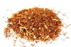 African Tea  roi-bush ( Aspalathus linearis ) Royalty Free Stock Photo