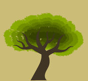 African tree Royalty Free Stock Image